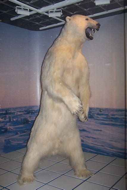 Polar Bear Mount at the Anchorage Airport   Flickr - Photo