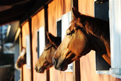 Equine Business Liability Insurance | Kay Cassell Equine