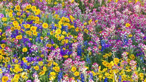 Wild Flowers Wallpaper (64+ images)
